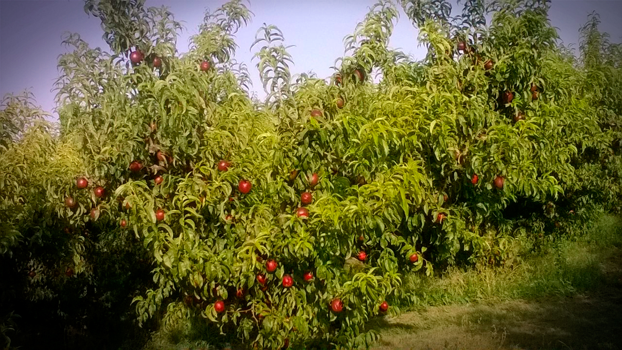 Una tierra extraordinaria, produce fruta extraordinaria