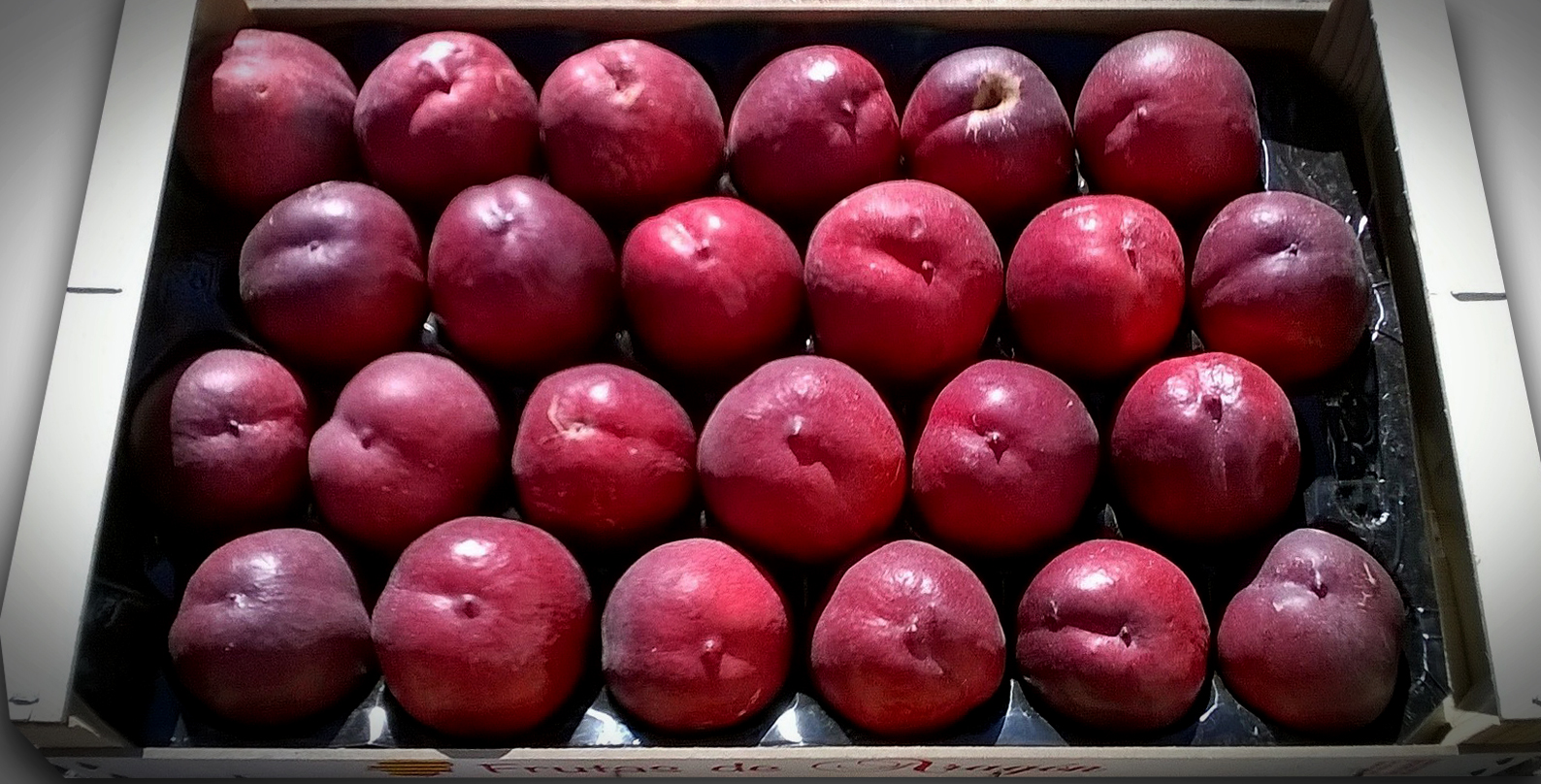 Jalon Nature, la mejor fruta de Aragón